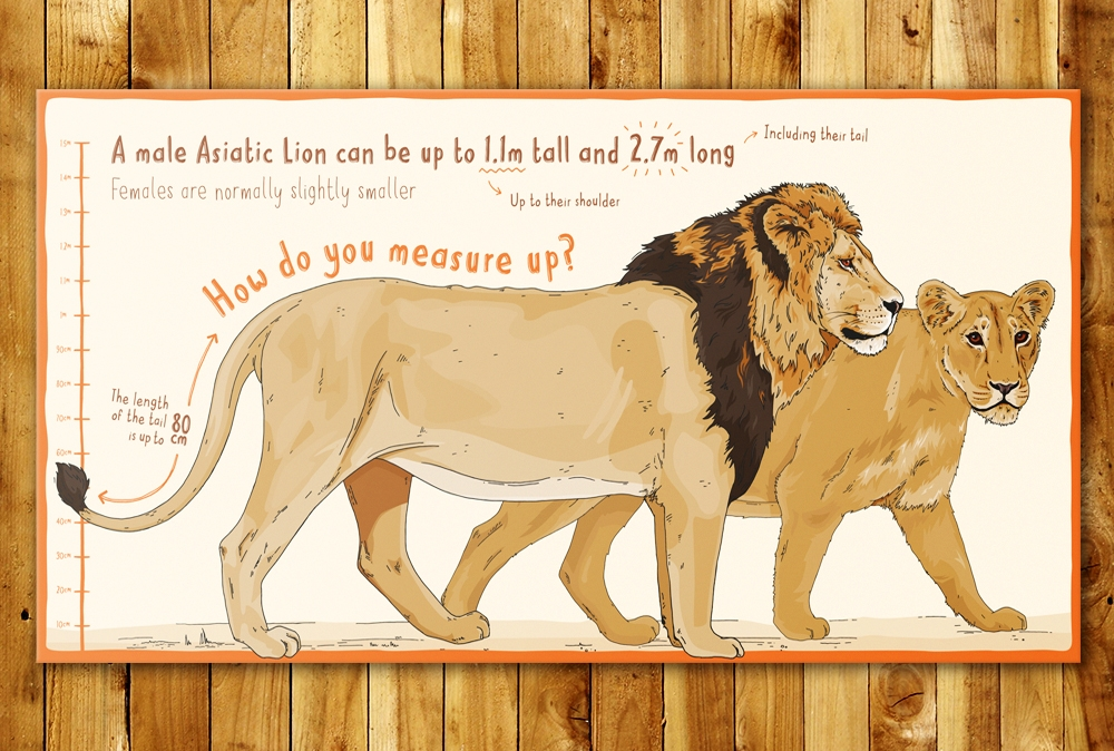 Chester zoo asiatic lion sign design illustration