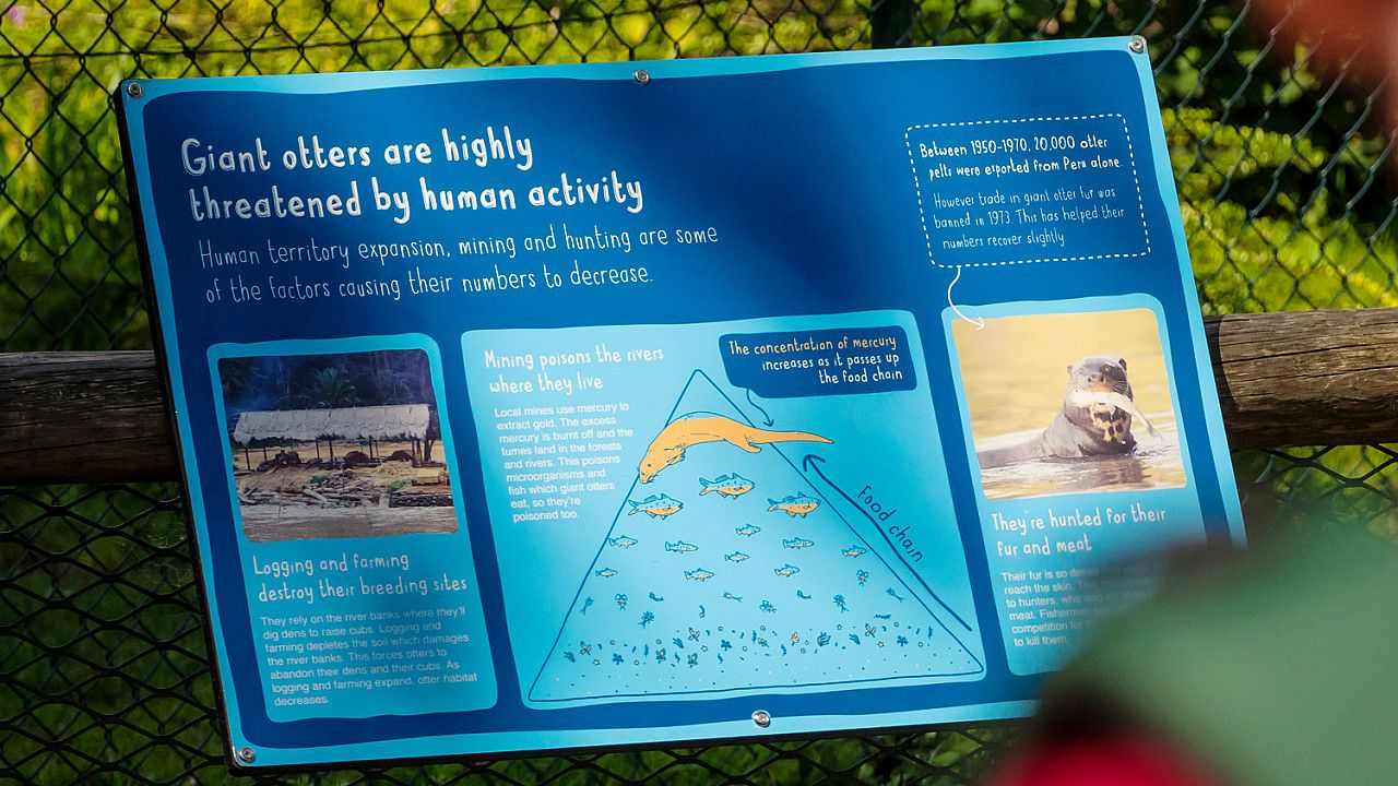 Chester Zoo interpretation panel design
